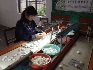 Separating the cocoons with one worm from those with two and tossing the bad ones