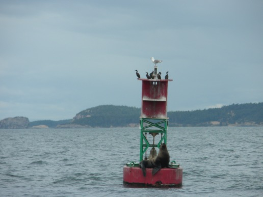 Sea lion and cormorants hanging out on a buoy