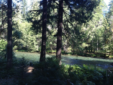 View of the Mckenzie River from our cabin