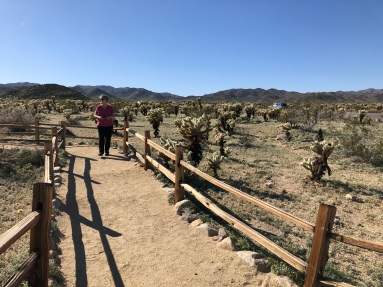 The park also has plenty of cholla. Here's Robin in the Cholla Cactus Garden.