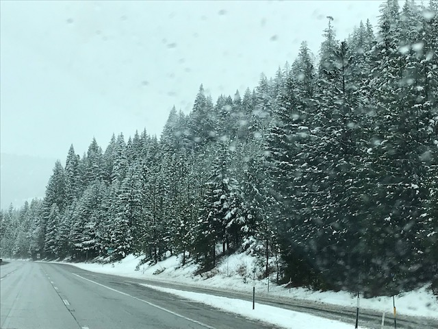 Lots of snow on the trees in the northern California mountains. On the roads, not so much.